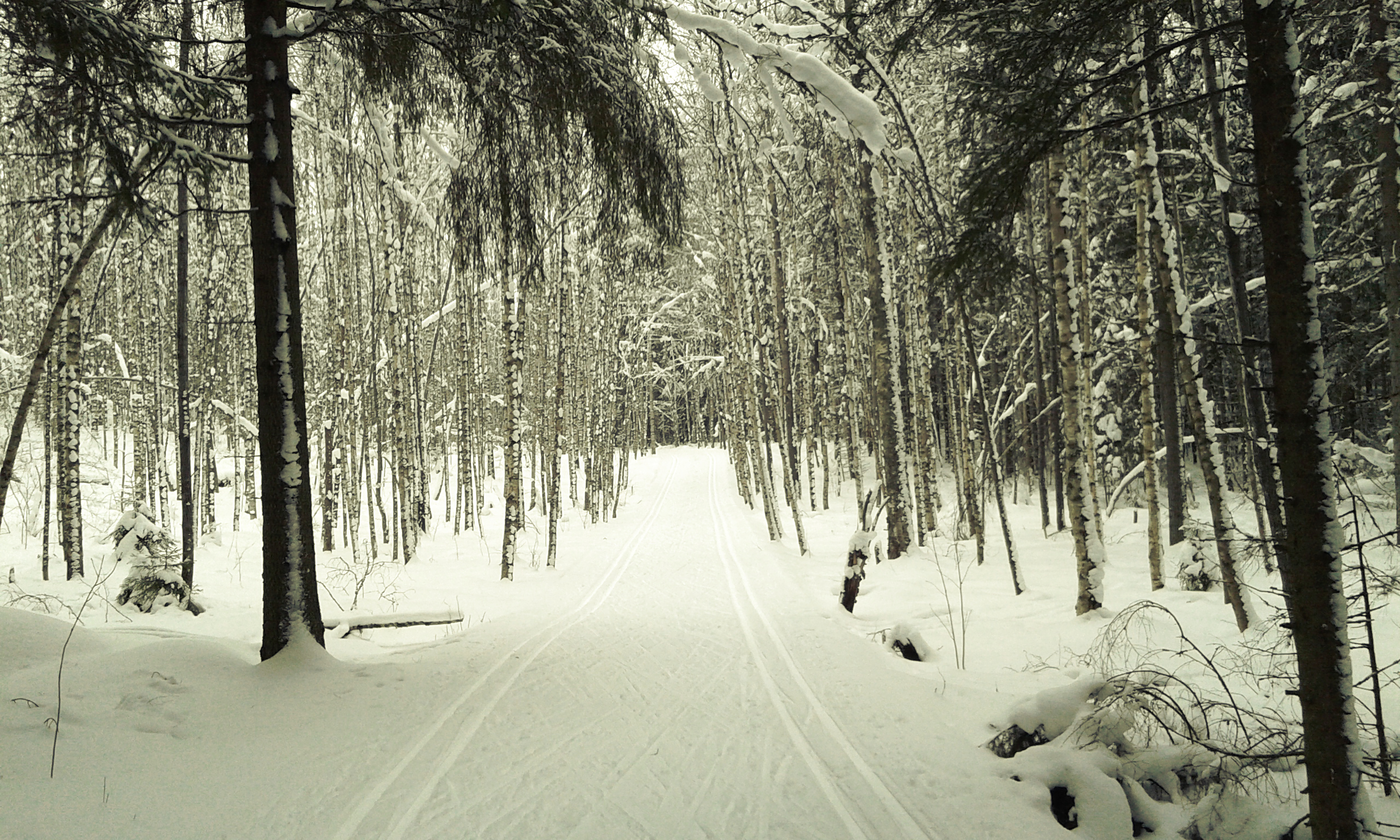 talvinen maisema jossa edessä avautuu latupari koivikon halki uralla